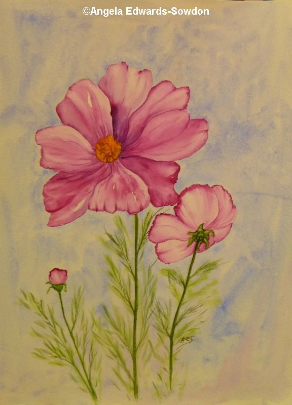cosmos flower, art classes, telford artist
