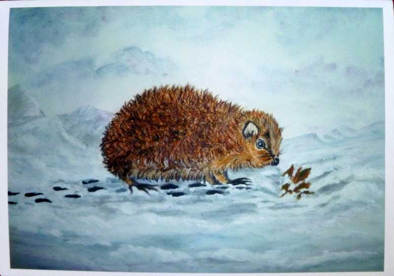 Hedgehog - Telford